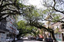 Iniciativa pioneira de criação do patrimônio ambiental qualifica a cidade