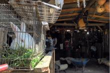 Coelhos, pônei, patas, galos e galinhas são atração para os visitantes