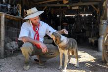 Acampados do Piquete Campeiros de Morungava trouxeram seus animais