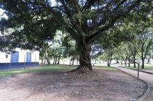 Praça Brigadeiro Sampaio receberá poda e manutenção de bancos e brinquedos