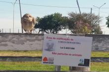 Setor de fauna protegeu o local no Parque Maurício Sirotsky Sobrinho
