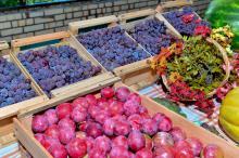 Evento é gratuito e contará com bancas de frutas, gastronomia e artesanato