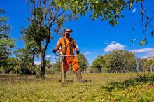 Estão previstos trabalhos de capina, corte de grama e limpeza