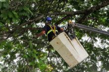Atualmente existem 7,5 mil protocolos abertos relativos à arborização