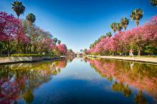 Semana da Primavera terá início nesta quarta, com plantios educativos