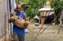 Local registra um grande número de animais abandonados por moradores